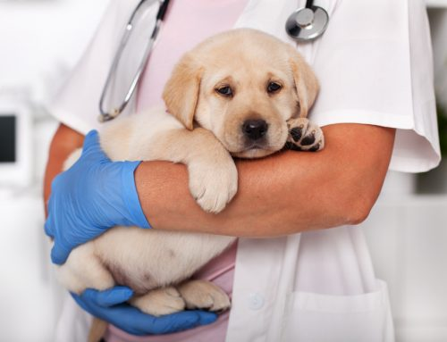 Top 10 Reasons to Fear Parvovirus in Dogs