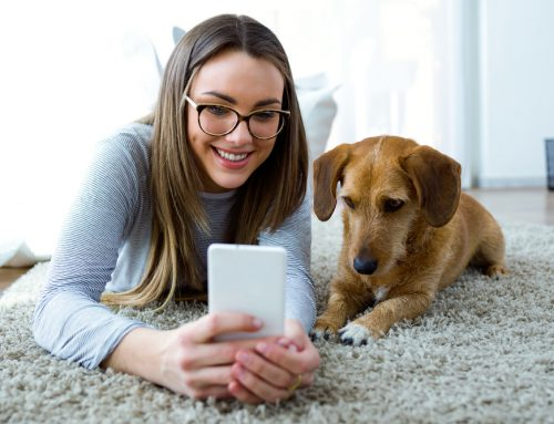 There's an App for That! How Airway Animal Clinic's App Benefits You and Your Pet