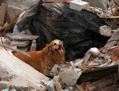 Trouble Ahead: 7 Ways to Prepare Your Pet for Disaster