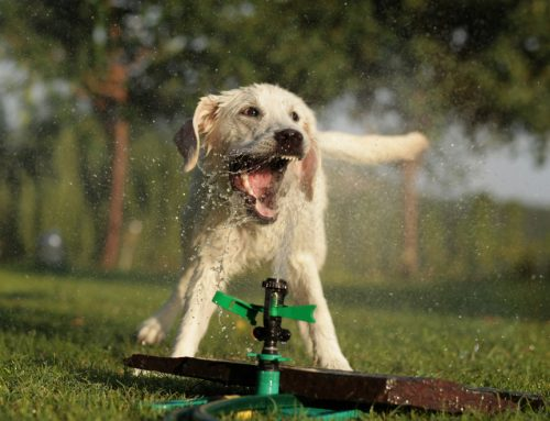 4 Tips to Help Your Pet Have a Safe Summer