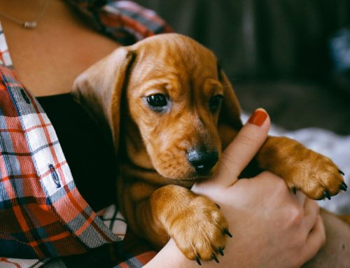 Setting Your New Puppy Up for Success