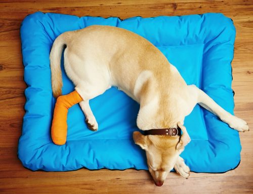 How to Create a Pet First Aid Kit