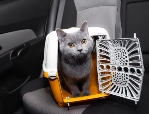 Keep your Pet Zen for Their Next Veterinary Visit